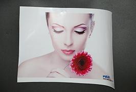 Self-Adhesive Վինիլային արտադրվում է 3.2 մ (10 ֆուտ) Էկո վճարունակ տպիչ WER-ES3202